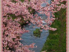 ご近所の桜さんぽ・・・ ★西公園など★