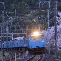 青色の国鉄型車両103系を追いかけて、満開な桜が咲き広がる中山溪に訪れてみた