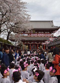 ひとりお花見部 2016 今年の花まつりは台東区で① 浅草篇