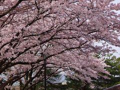 淡墨桜・白川郷・高山観光バスツアー(01) 新大阪~多賀SA~関ケ原ICまで。