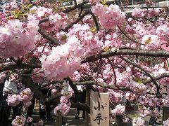 2016年造幣局桜の通り抜け
