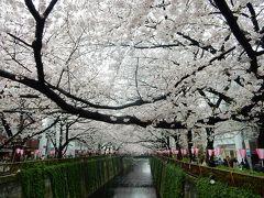 東京2016桜 【8】目黒川
