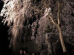 日本三大桜 高田城趾公園