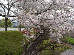 富士市内の桜・原田公園 2016.04.08