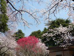 新宿御苑のサクラ_2016_(新宿区・内藤町)