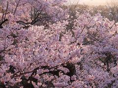 《東京から日帰り》#32 長野県 高遠城址公園と天龍峡で桜まみれ!