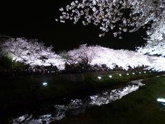 世界で一番きれいな夜桜