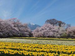 実相寺の神代桜と眞原の桜並木