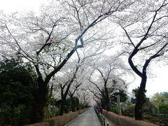 東京2016桜 【9】青山霊園