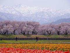 日本にこんな景色があったとは!! 「春の四重奏」を見に日帰りで富山旅行へ♪