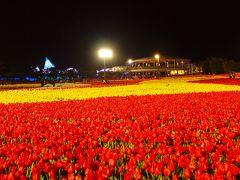 なばなの里 チューリップ祭り&イルミネーション 長島地ビール飲んでお花見をしましょう