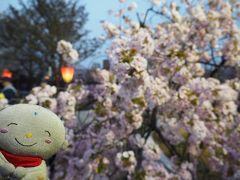 花嵐の後の桜を求めて;大阪造幣局の通り抜け