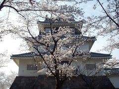 長岡市悠久山公園の桜