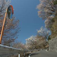 【茨城県】高峯山・里山の山桜、雨引観音。