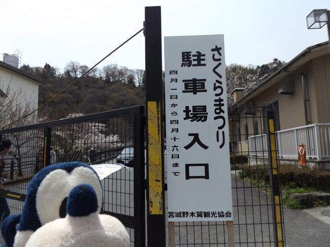 グーちゃん、春の本合宿で箱根に花見に行く!(宮城野の桜でKちゃんを思い出せ!編)