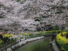 桜・桜・桜(京都 前編)