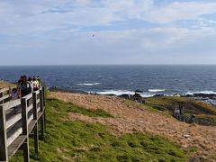 2016年・オーストラリアの旅(6)~フィリップ島ペンギンツアー