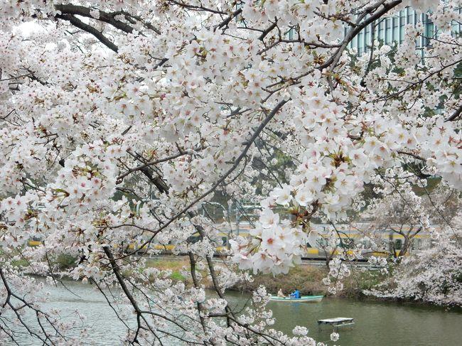 週末と桜の満開が重なりました。あいにく空は曇りでしたが、満開の桜は本当に美しかったです。<br /><br />---------------------------------------------------------------<br />スケジュール<br /><br /> 3月27日 自宅−駒込駅 六義園観光 −自宅<br /> 3月29日 自宅−東京駅 皇居 乾通り観光 靖国神社観光 −九段下駅−自宅 <br /> 4月2日  自宅−日暮里駅−北千住駅−西新井駅−大師前駅 西新井大師観光 −大師前駅−西新井駅−浅草駅 <br />      隅田川観光 −浅草駅−蔵前駅−門前仲町駅 大横川観光 −門前仲町駅−九段下駅 皇居 千鳥ヶ淵観光<br />      −九段下駅−自宅<br />★4月3日  自宅−渋谷駅−中目黒駅 目黒川観光 中目黒駅−渋谷駅−青山一丁目駅 青山霊園観光 青山一丁目駅−<br />      永田町駅−飯田橋駅 外堀通り観光 −飯田橋駅−自宅<br />