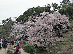 盛春の「新宿御苑」♪ 「もしもツアーズ」に遭遇!