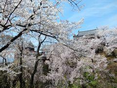長野2016桜 【1】上田城跡