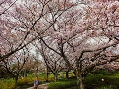 高松市一の絶景・古墳群山の桜と高松城跡の桜とミシュラン三ツ星庭園