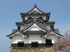 桜が満開の彦根城