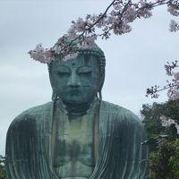 桜咲く鎌倉(とおまけの江の島)ぶらり