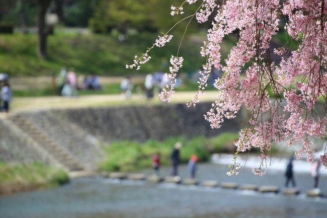 上賀茂神社から半木の道を歩いてきました。<br />贅沢な散策路です。<br />