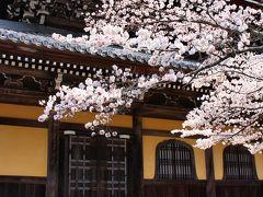 2016今年も桜咲く京都に行ってきました(祇園白川、南禅寺、インクライン)