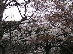 1泊2日で行く目黒川の桜・皇居乾通りの桜・御柱祭を楽しむ旅パート2