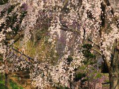 長野 桜めぐり~桑田薬師堂、常福寺、勝間薬師堂、今泉薬師堂、陸郷、荒神山公園
