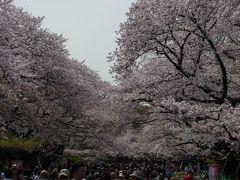 春爛漫の「上野公園」♪