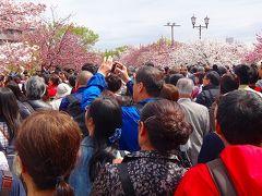 超久しぶりの・・・大阪造幣局 桜の通り抜け 上巻。