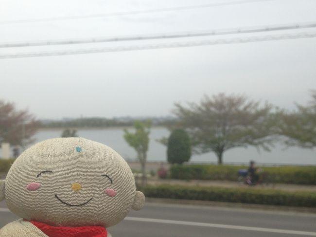 世界灌漑施設遺産に岸和田市の久米田池が登録された事を祝って本日4月17日だんじりの曳行が行われました。世界灌漑施設遺産に岸和田市の久米田池が登録された事を祝って本日4月17日だんじりの曳行が行われました。