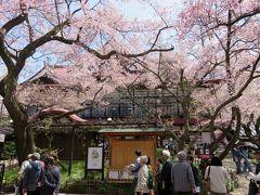 2016春、信州の桜と城巡り(5/28):4月15日(5):高遠城址(1):小彼岸桜、勘助曲輪、高遠町桜憲章