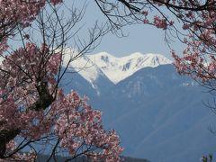 2016春、信州の桜と城巡り(7/28):4月15日(7):高遠城址(3):小彼岸桜、南アルプス眺望、白兎橋