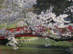 2016春、信州の桜と城巡り(11/28):4月15日(11):臥龍公園(1):龍ヶ池、染井吉野、八重紅枝垂