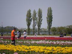 千葉佐倉・100種71万本のチューリップフェスタ~新緑のDIC川村記念美術館を訪れて