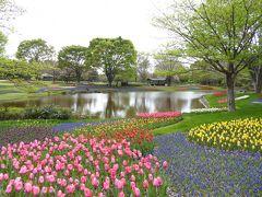 春の「国営昭和記念公園」♪ Vol2 美しいチューリップのオランダ風景♪