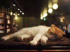 ☆猫巡礼の旅⑧ ー池袋 猫の居る休憩所299篇ー☆