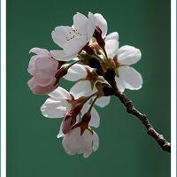 Solitary Journey [1741] ぽかぽか陽気の中、春色の花を楽しみながら近くの山里・田畑をドライブ<豊穣池(念仏の森)>広島県東広島市
