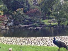 [ロンドンの駅周辺散策 23]Notting Hill&Holland park