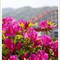 Solitary Journey [1752] 春色の花を楽しむ♪ツツジの花が咲き始めていました。<平清盛が開削したことで有名な音戸の瀬戸>広島県呉市