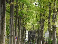 東京吉祥寺・総理も学んだ成蹊学園のケヤキ並木~春色の昭和記念公園を訪れて