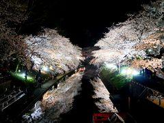 【国内212】2016.4富山に白えびを食べに行く1-白えび亭,松川公園の素晴らしい桜