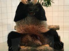 やっとパンダに会えた!! JALパックパンダのバックヤードツアーに行ってきた!! その2