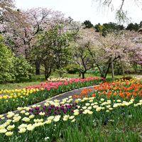 秩父宮記念公園の花めぐり 2016(御殿場)