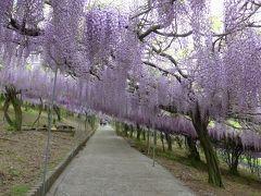 桜から藤へとお花の名所も移ろいで行きます(*^-^*)