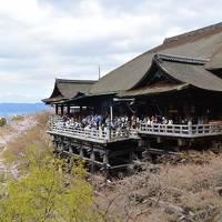 1泊2日の京都三人旅!お花見リベンジ