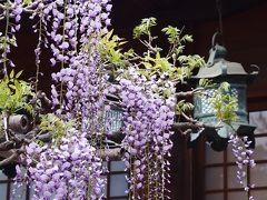 春過ぎて、夏来たるらし・・・新緑の奈良の古道を歩く旅。~3日目・きたまち~